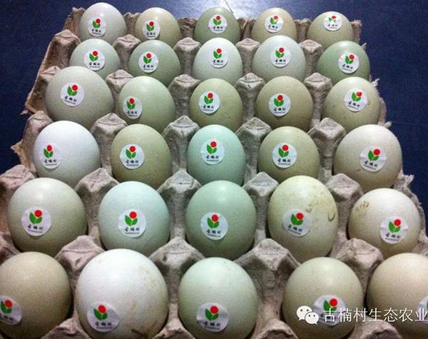生态土鸡蛋