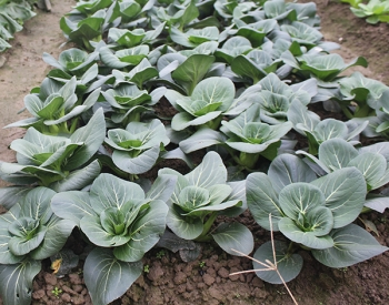 广东有机蔬菜