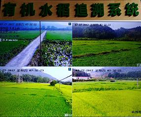 有机水稻追溯系统